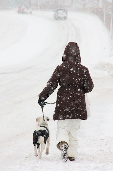Image result for dog walking in snow